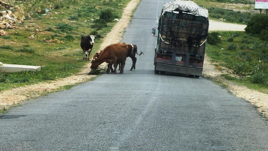 Obstacles sur la route
