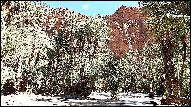 Gorges et palmeraie