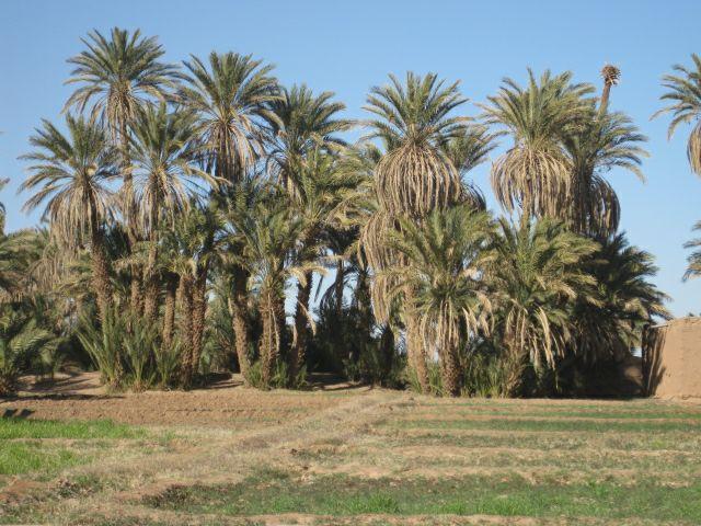 La palmeraie 2