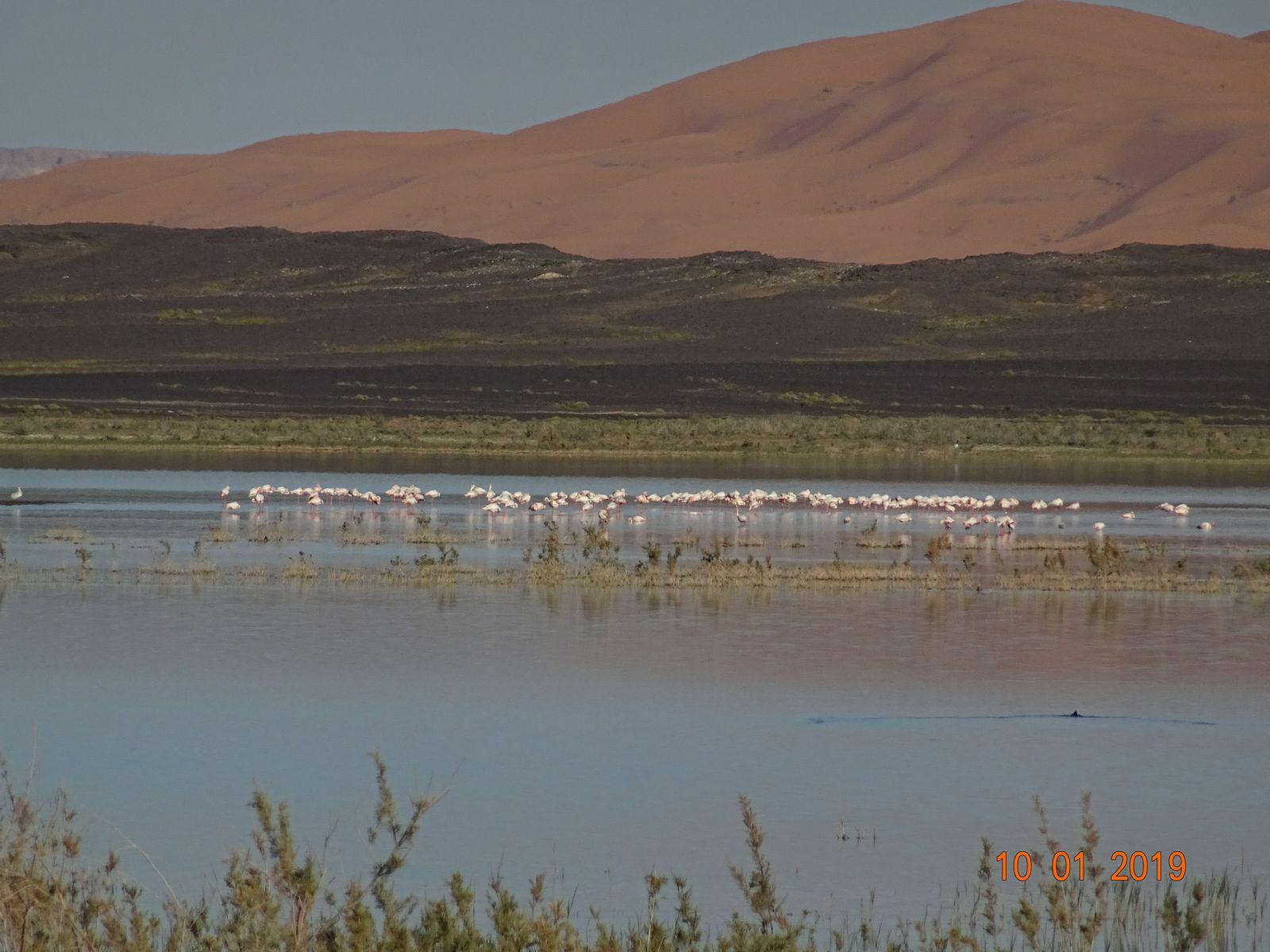 Le lac de merzouga 2