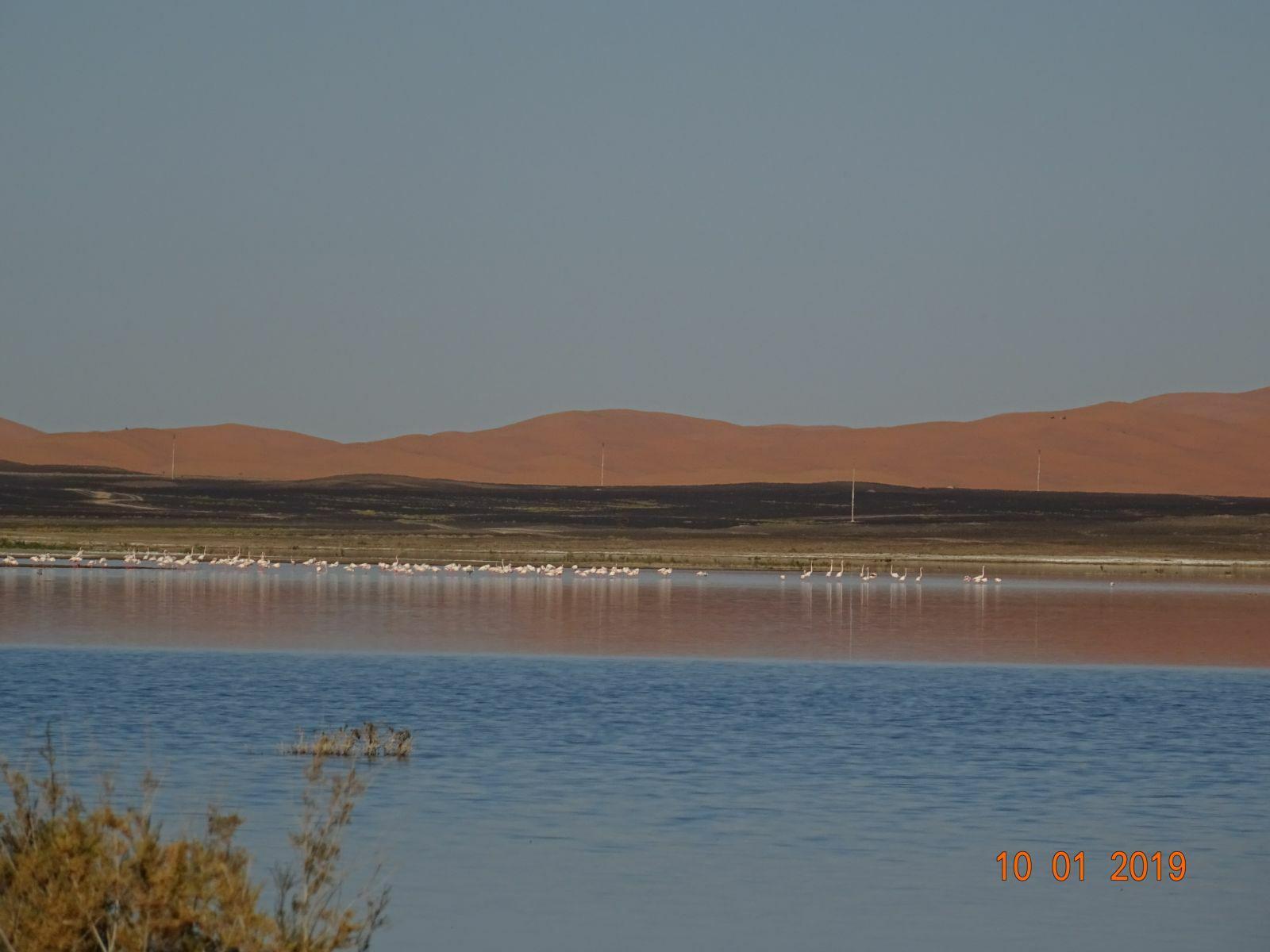 Le lac de merzouga 3