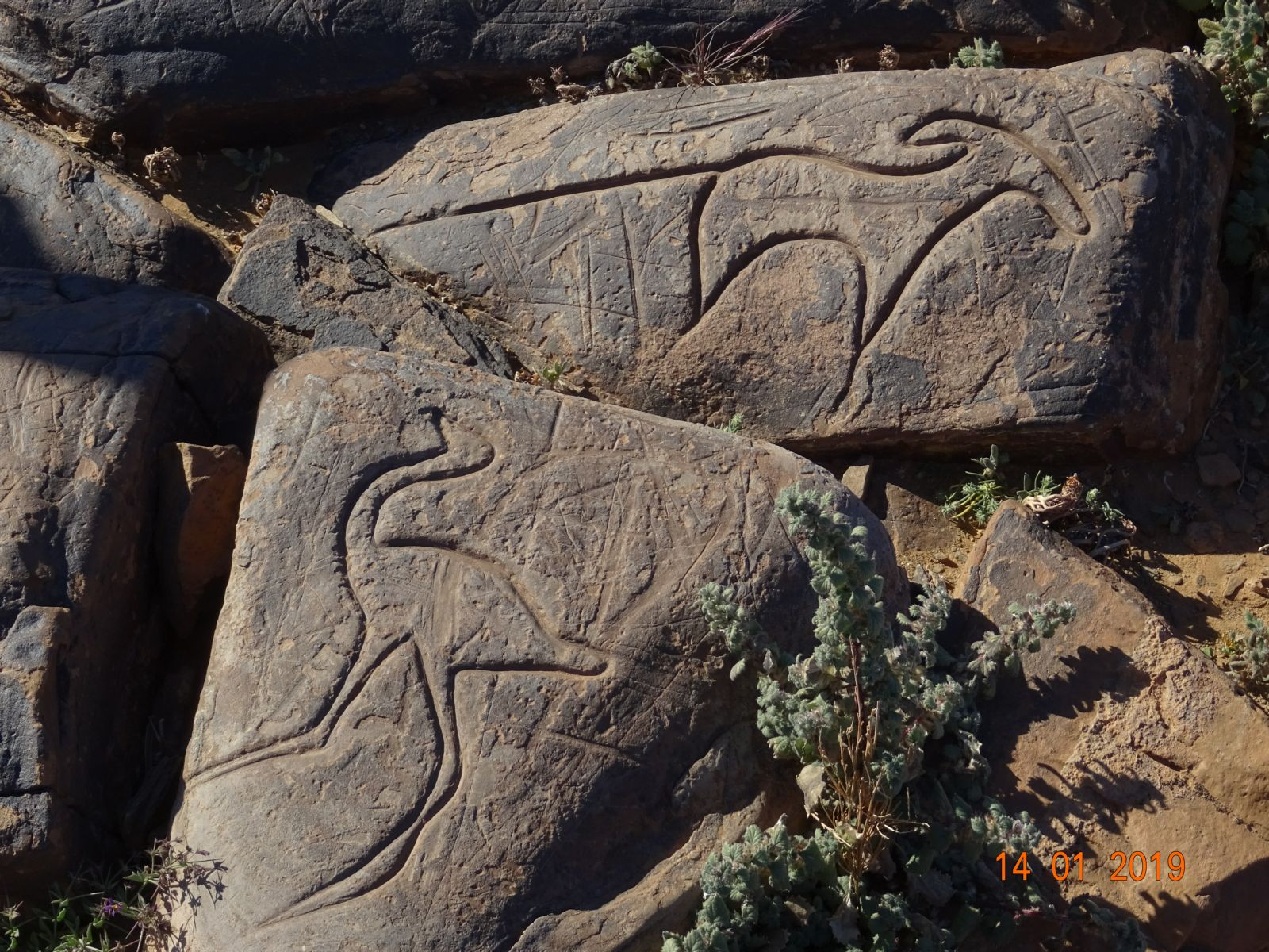 Les peintures rupestres 3